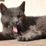 眠れない…を改善!食品からのトリプトファン摂取が快眠の秘訣